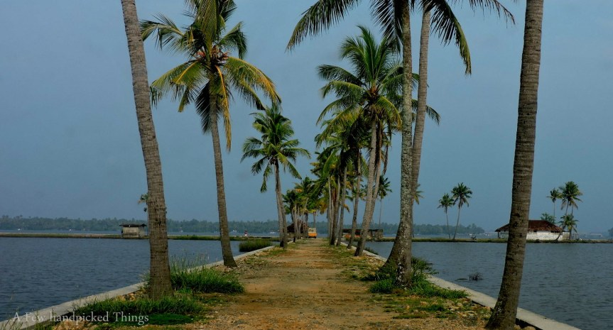 The path towards the Boat Jetty area is lined with coconut trees which finally tapers into the water